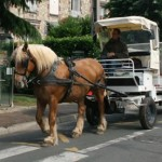 HorseCartRecycling